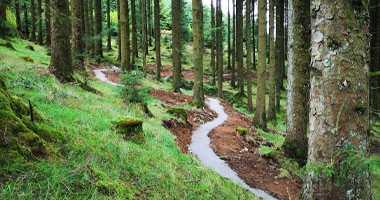Slieve Bloom Mountian Walk