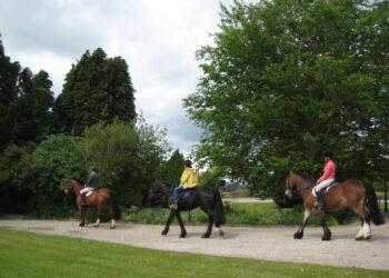 Horse trekking Ardmore House Kinnitty B&B